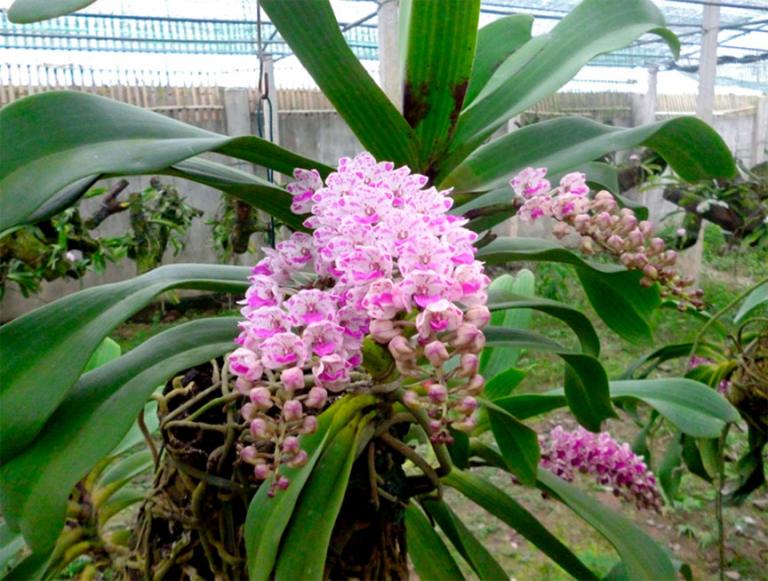 Hoa sở hữu nét đẹp tự nhiên, sang trọng