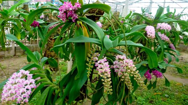 Lá hoa khá mềm mại và hấp dẫn