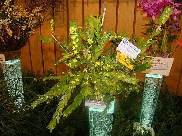 Lan Móng Rùa là loài hoa quý hiếm