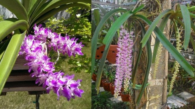 Trồng hoa tại nơi tránh tiếp xúc với ánh nắng trực tiếp