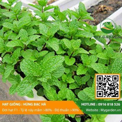 Hat-giong-Hung-bac-ha-My-Garden-hinh-44
