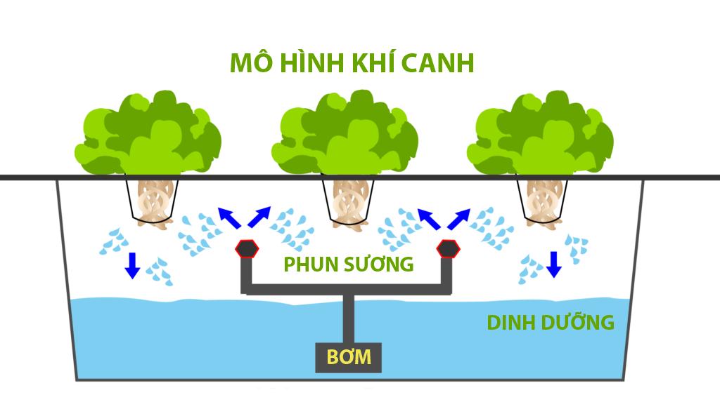 Mô tả mô hình trồng rau khí canh đang được sử dụng phổ biến