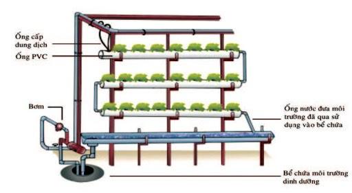 Mô hình trồng rau thủy canh cơ bản