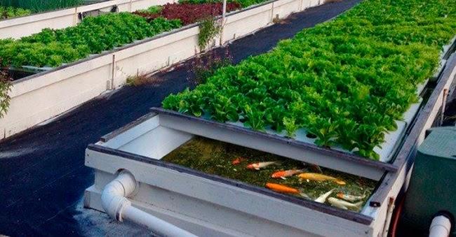 Nguồn thực phẩm sạch và an toàn cho sức khỏe