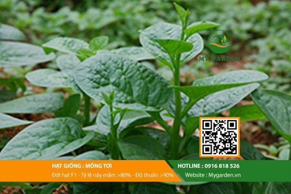 Hat-giong-Mong-toi-My-Garden-hinh-11