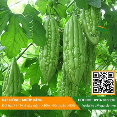 Hat-giong-Muop-dang-My-Garden-hinh-33