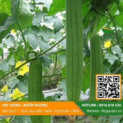 Hat-giong-Muop-huong-My-Garden-hinh-33