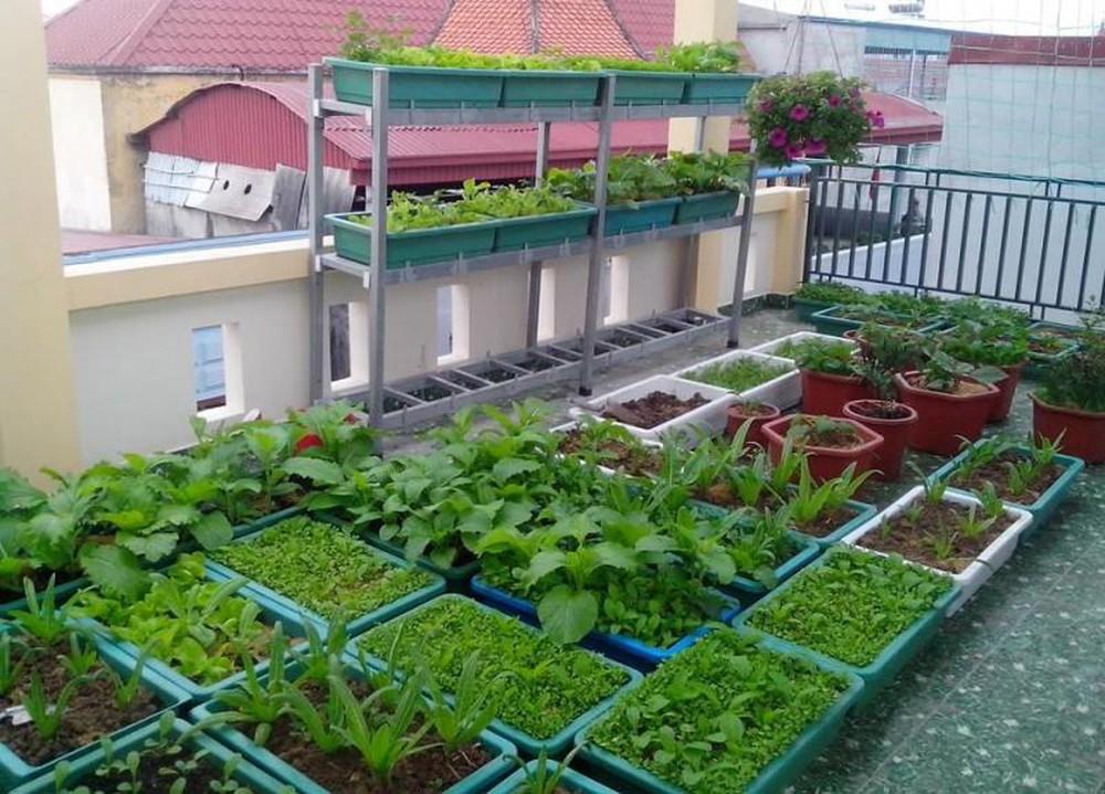 trong-rau-sach-tai-nha-my-garden-hinh-1