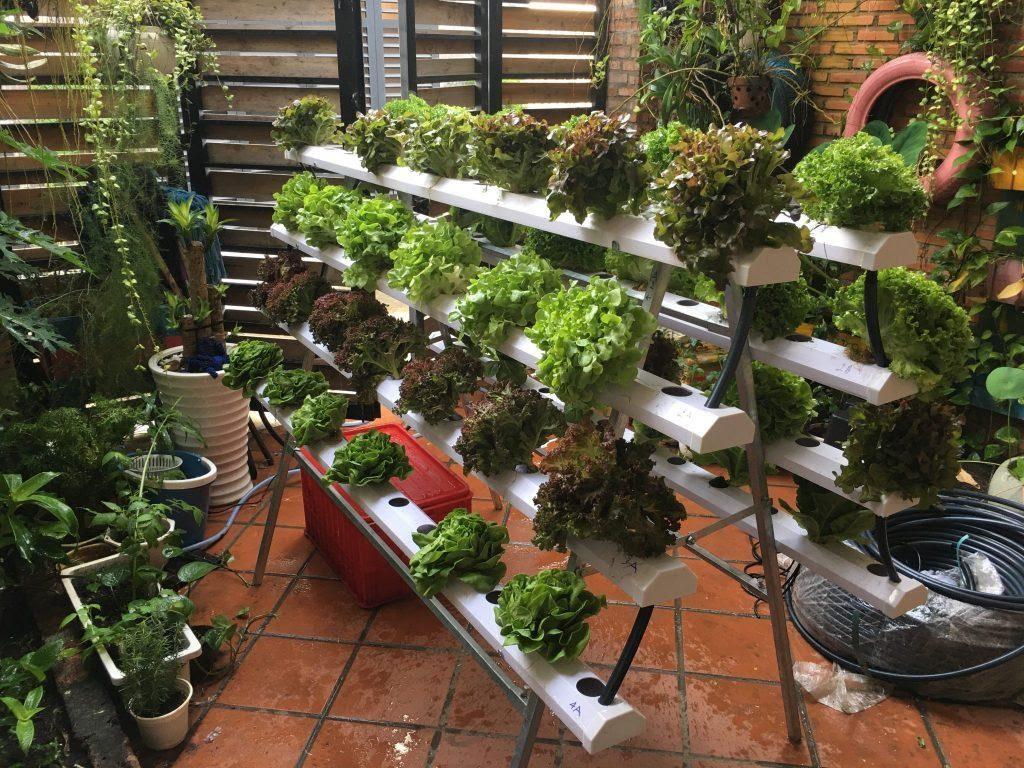 My Garden – Đơn vị thiết kế và thi công giàn rau thủy canh chữ A chất lượng cao