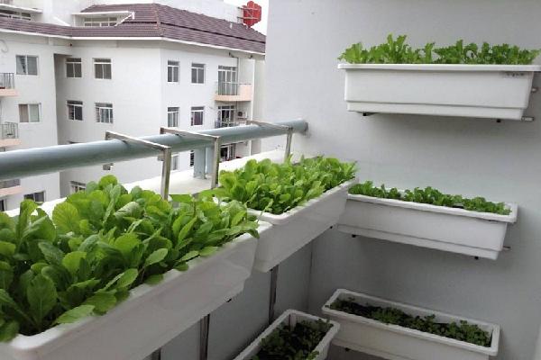 Mô hình trồng rau sạch ban công