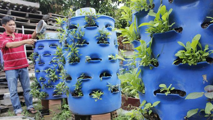 trồng rau sạch từ rác hữu cơ