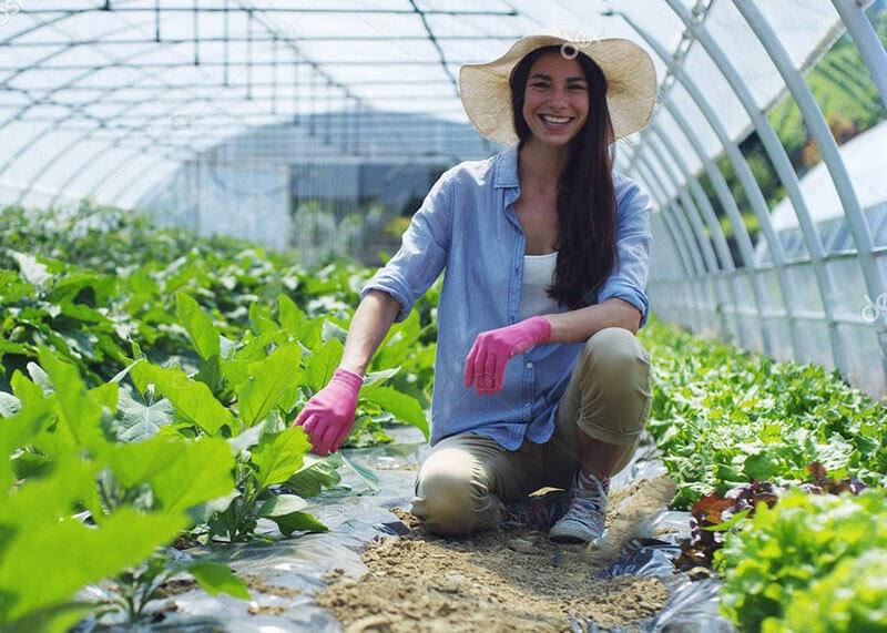 Các loại rau trồng trong nhà kính cho năng suất cao