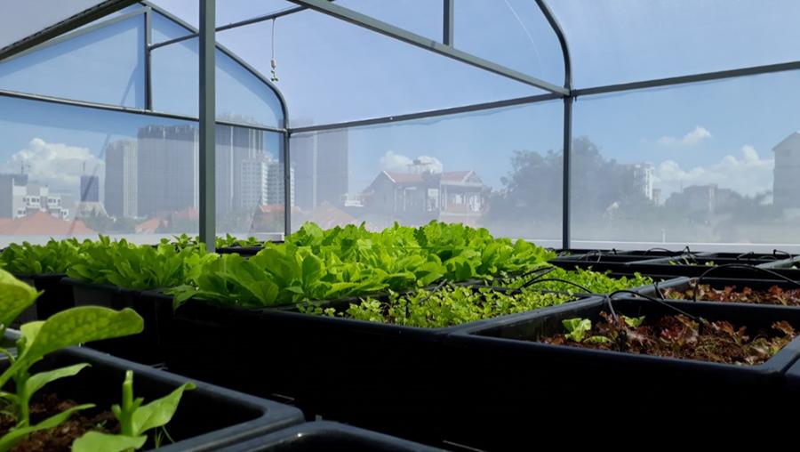 Đảm bảo quy trình trồng rau sạch trong nhà kính để đạt năng suất cao