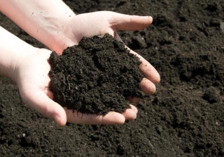 Đất trồng hữu cơ cho cây cảnh