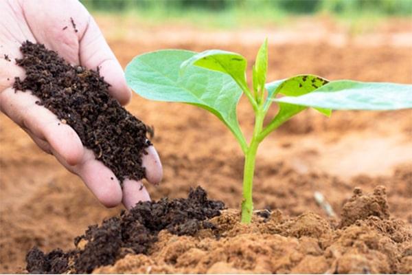 Đất trồng vô cơ cho cây cảnh