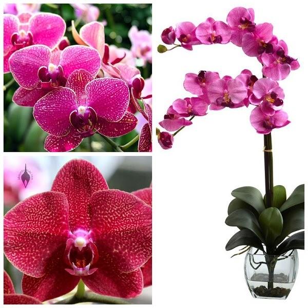 Loài hoa quý mang nhiều giá trị