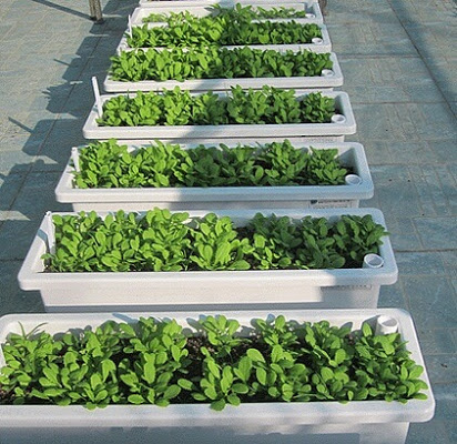 Chậu trồng đa dụng với chiều ngang hẹp