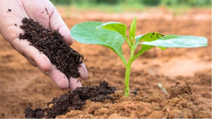 cách chăm sóc vườn rau sạch tại nhà