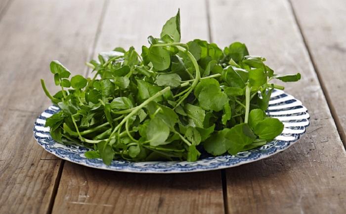 cách chăm sóc rau cải xoong tại nhà