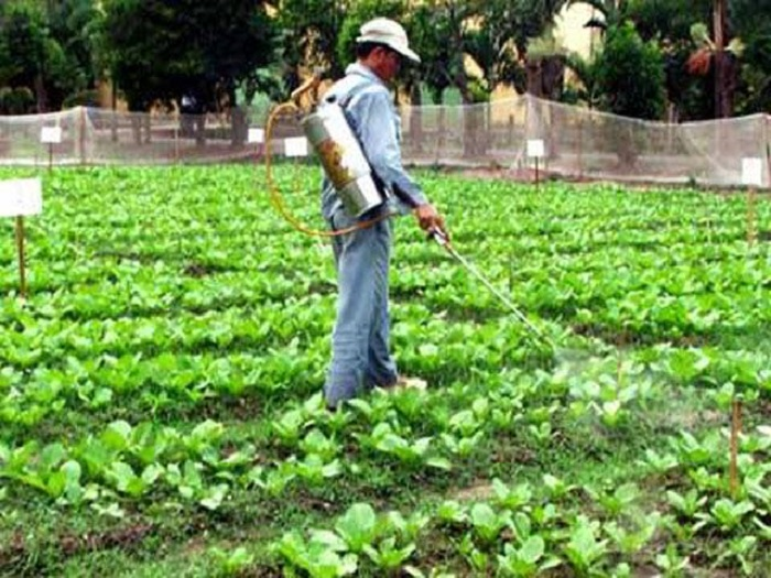 cách chăm sóc vườn rau an toàn