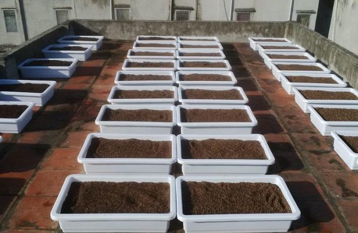cách làm đât trồng rau trên sân thượng hiệu quả