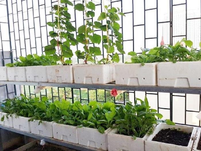 Dịch vụ thiêt kế vườn rau nhỏ
