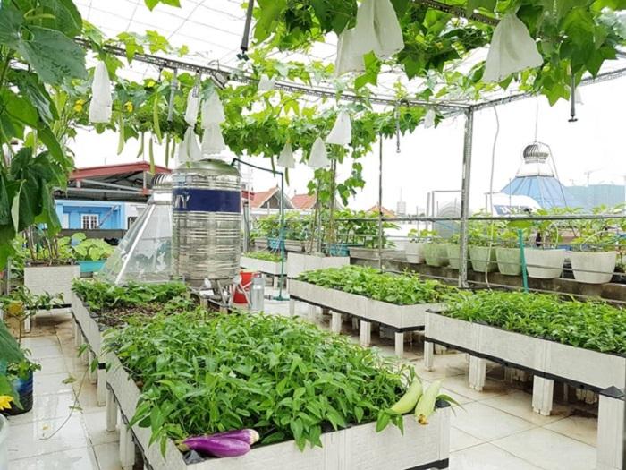 cách thiết kế vườn rau sạch đẹp tại nahf