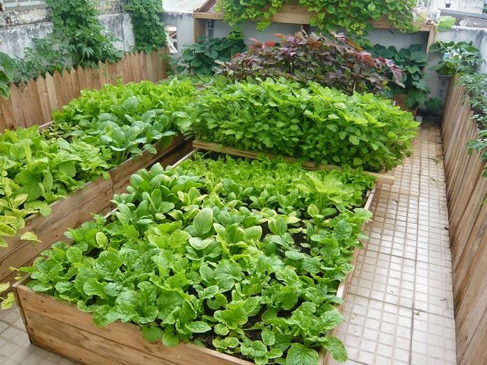 Cách thiết kế vườn rau sạch