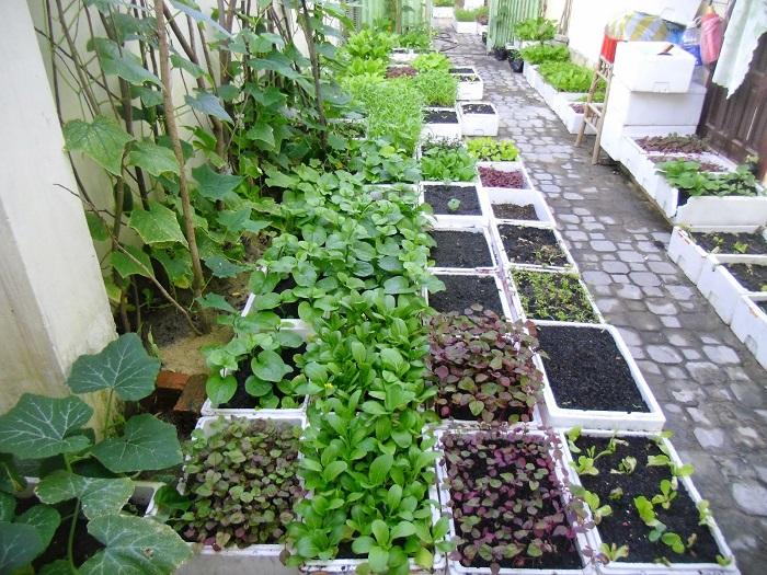 thiết kế vườn rau tron nhà