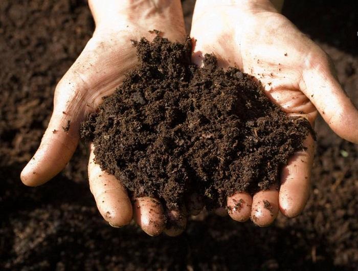 làm đất trồng dâu tây