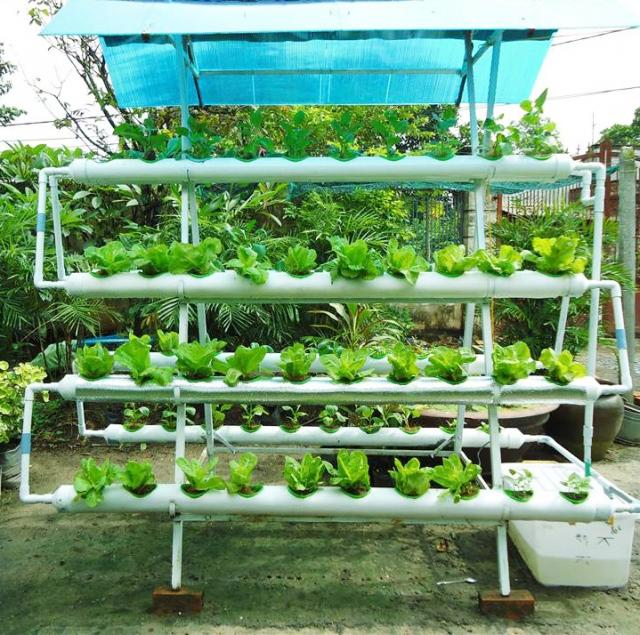 My Garden - đồng hành cùng người trồng rau hiệu quả