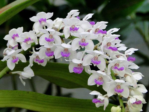 Nhờ có Đạm, cây lan phát triển tốt- chất dinh dưỡng cho hoa lan