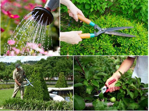 Cách thiết kế rau sạch đúng cách