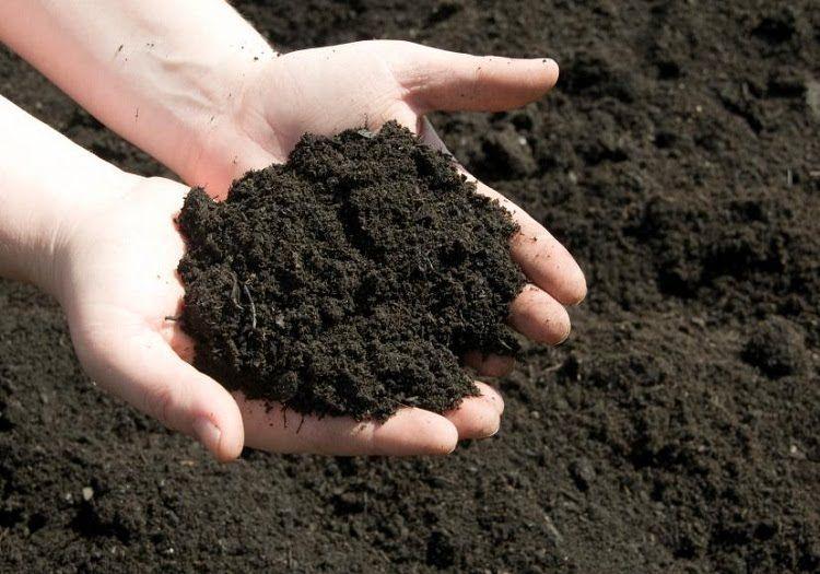 Đất trồng cây sạch
