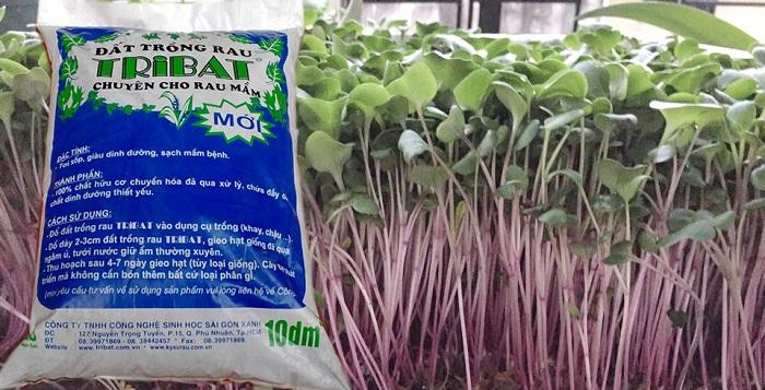 cách cải tạo đất trồng rau mầm