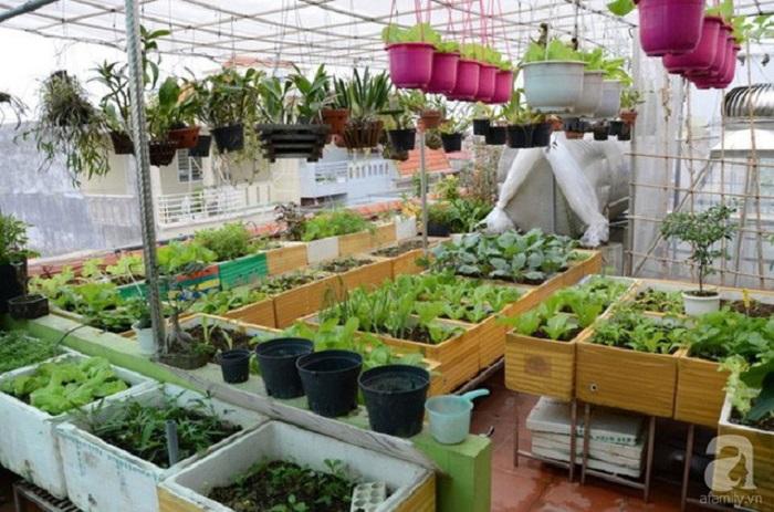 đất trồng rau trên sân thượng