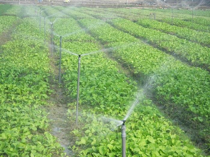 hệ thống tưới nước phun mưa chất lượng