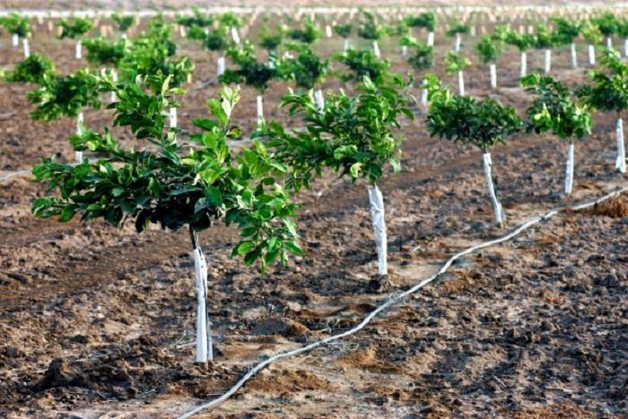 Xây dựng hệ thống tưới vườn cây ăn trái 3 trong 1