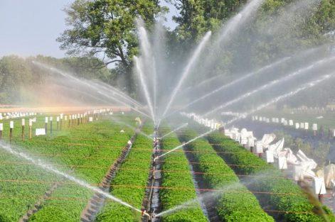hệ thống tưới nước phun mưa