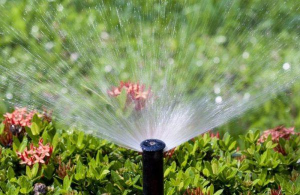 Hệ thống tưới pjun mưa thông minh