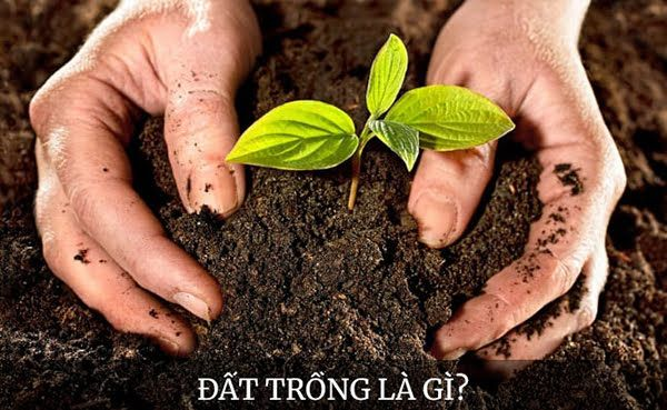 Khái niệm đất trồng