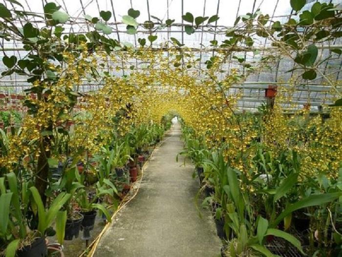 Thiết kế hệ thống tưới phun mưa cho lan tại nhà