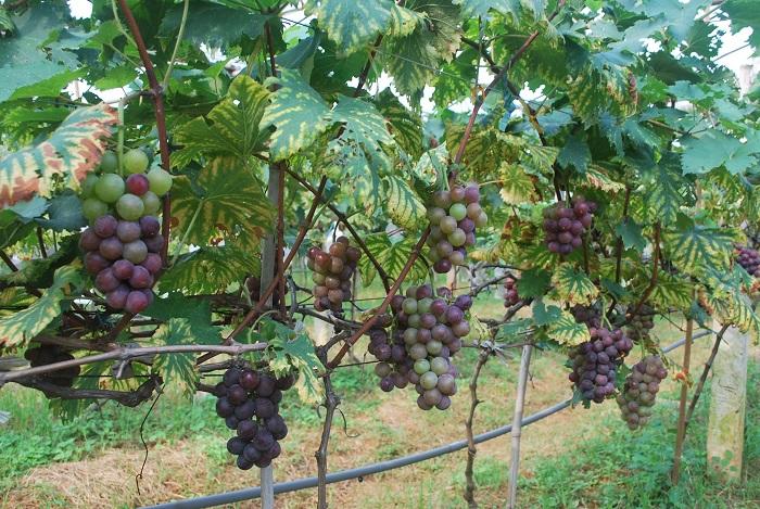Xây dựng hệ thống tưới nhỏ giọt cho vườn cây ăn trái