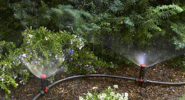 Thiết kế hệ thống tưới phun mưa cho rau