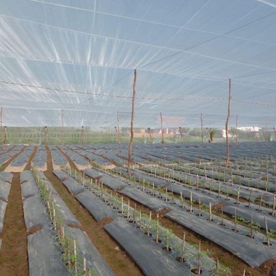 Có thể dựng nhà lưới trồng rau trên sân thượng theo mẫu nhà lưới trồng rau quy mô lớn