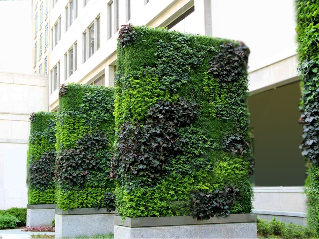 Thiết kế thi công tường cây ngoài trời