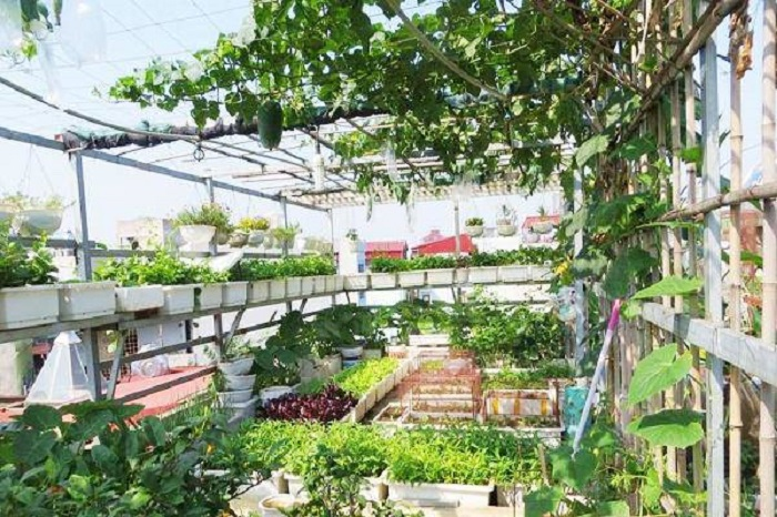 Thiết kế vườn rau 100m2