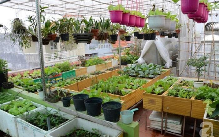 thiết kế vườn rau hiệu quả