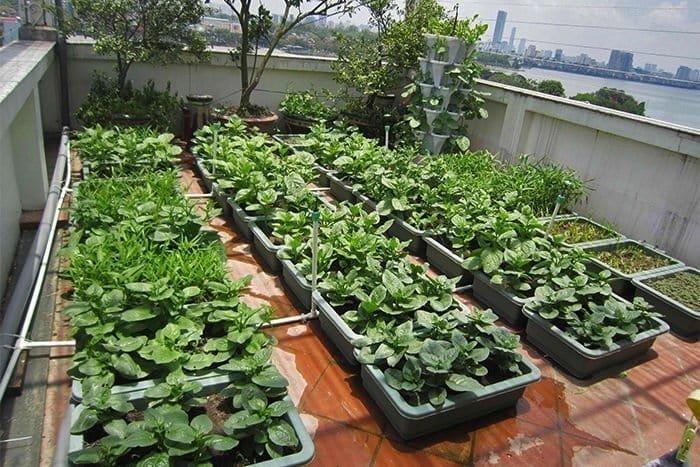 cách chăm sóc vườn rau sạch