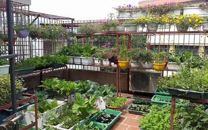 Cách thiết kế vườn rau sạch tại nahf